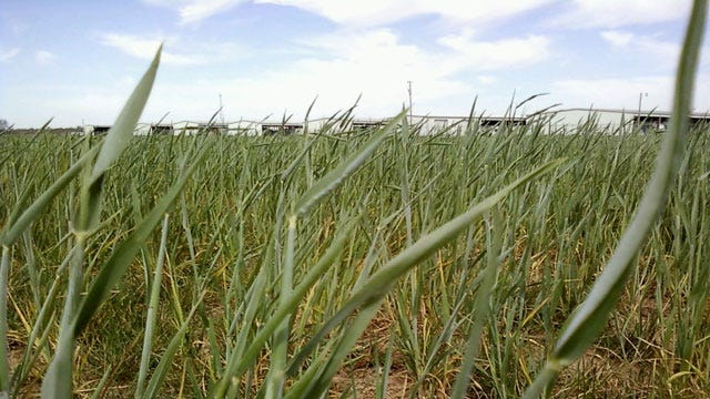 Goldsby Under Mandatory Water Rationing