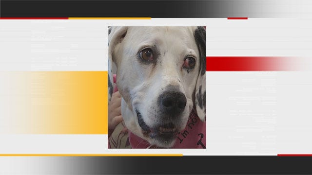 Oklahoma Rescue Dog Named Best In The Nation