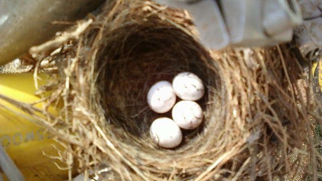 UPDATE: Tornado Birds Hatch