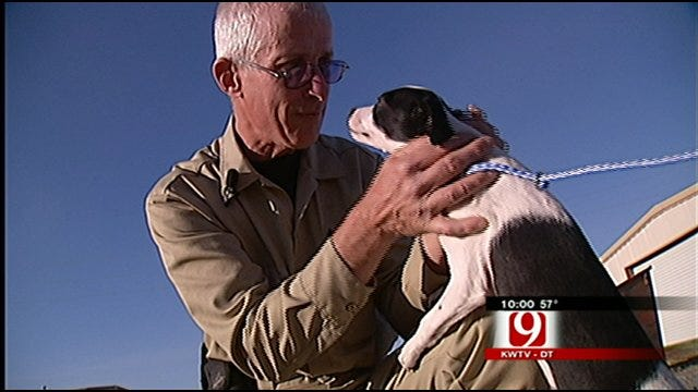 Oklahoma Puppy Survives Euthanasia, Will Now Get A Home