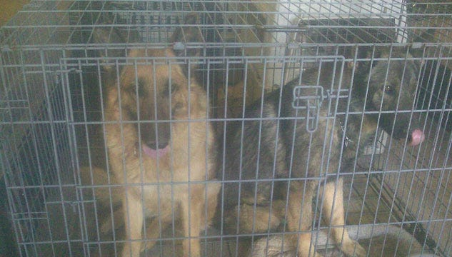 Harrah Grassfire Devastates Animal Shelter