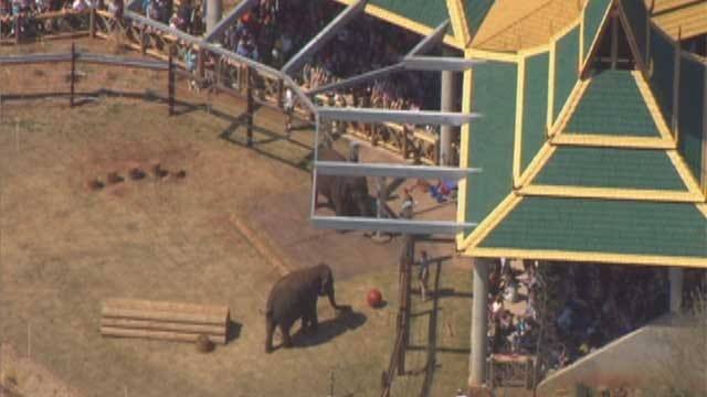 Oklahoma City Zoo Close To Setting Single-Day Record