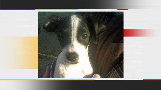 Adoption Process Beginning For Oklahoma Puppy Who Survived Euthanasia