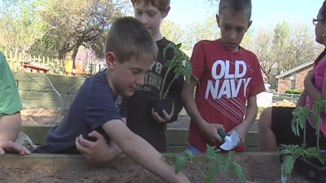 YMCA Plants Garden To Teach Kids Healthy Habits