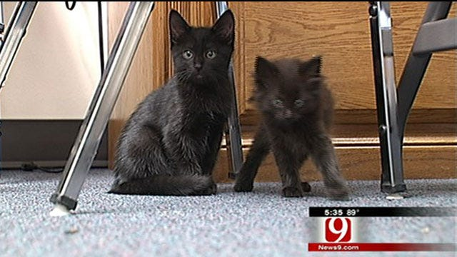 Lost And Found Pets After The Tornadoes