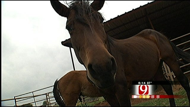 Miracle Horses Survive Oklahoma Twister