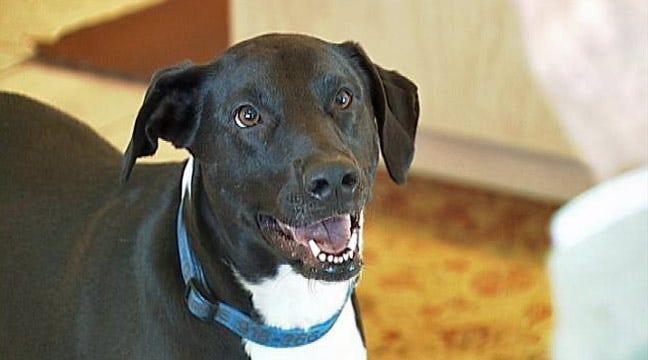 Meet Lucky, Bixby's Talking Dog