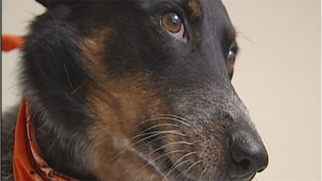 Oklahoma Earthquake Takes Its Toll On Our Pets