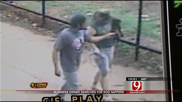 Surveillance Camera Captures Video Of OKC Dognappers