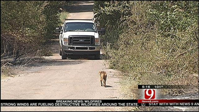 Animal Owners Hold Out Hope After NE OKC Wildfires