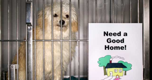 Norman Chamber Approves Animal Shelter Resolution