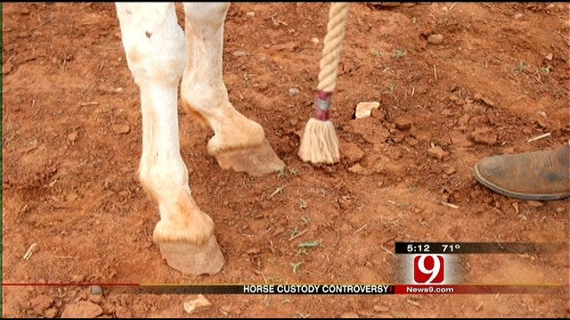 Piedmont Horse Owner May Not Get Seized Horses Back