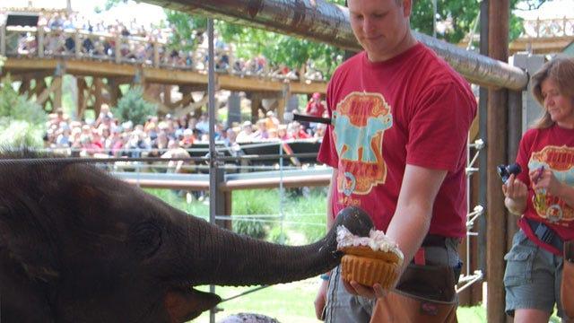 Malee The Elephant Celebrates Birthday With Special Cake At OKC Zoo