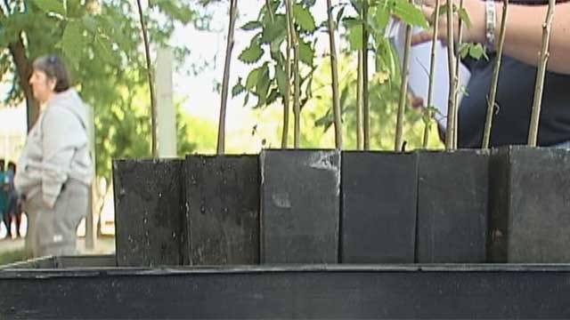 Seedlings From OKC Survivor Tree Spread New Life
