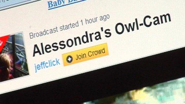 Oklahoma Owl Family Becomes Internet Sensation