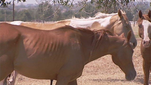 Grady County Woman Accused Of Animal Cruelty After Horse Found Dead