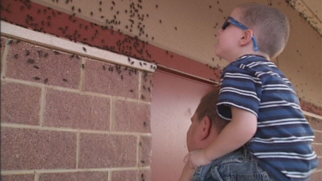 Oklahoma Cricket Infestation Is Creeping People Out
