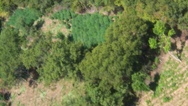 Agents Raid Large Marijuana Growing Operation In Ada