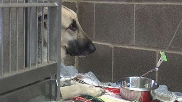 Dog Thrown From Bridge Undergoes Surgery, Previous Owners Speak to News 9