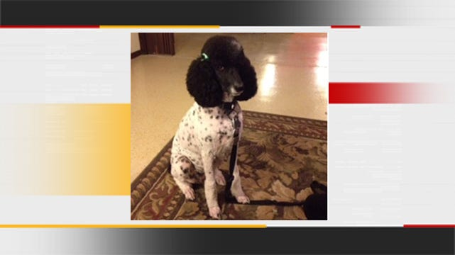 Owner Reports Missing Service Dog In Luther