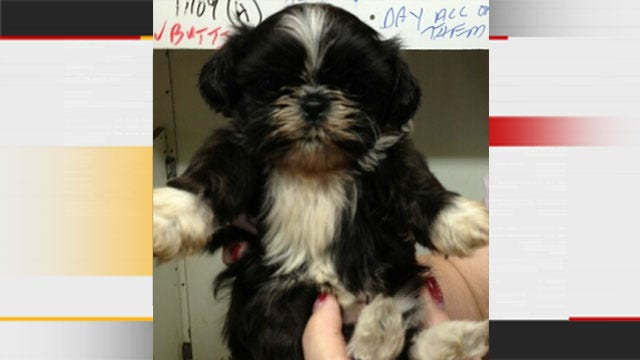 Puppy Stolen From Cleveland County Business