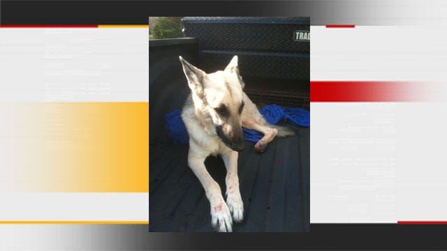 Dog Critically Injured After Being Thrown Off Bridge In OKC