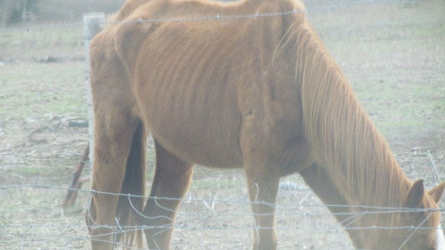 Blanchard Couple Pleads Not Guilty In Horse Abuse Case