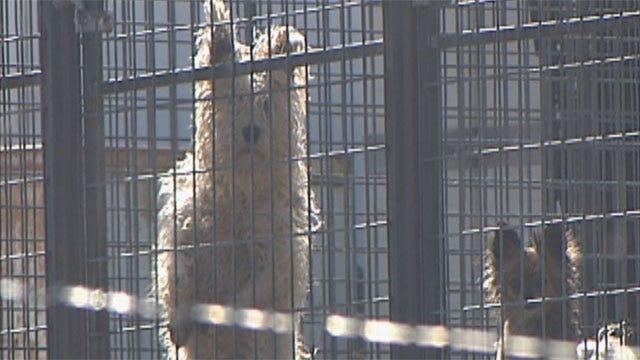 Enforcement Of Pet Breeder Law Requires Dogged Determination