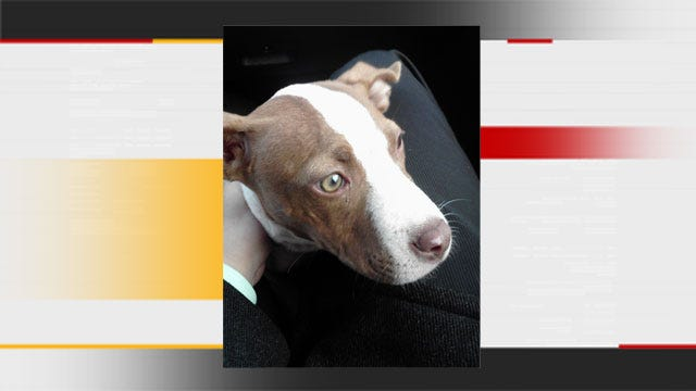 Puppy Follows News 9 Crew In Search of New Home