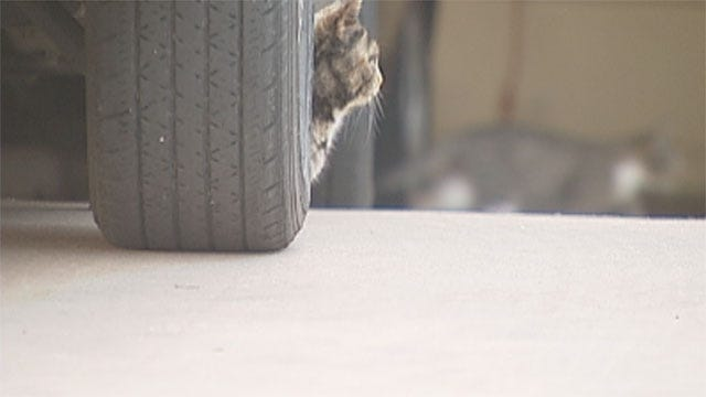 Feral Cats Invade Southwest OKC Neighborhood, Homeowners Upset