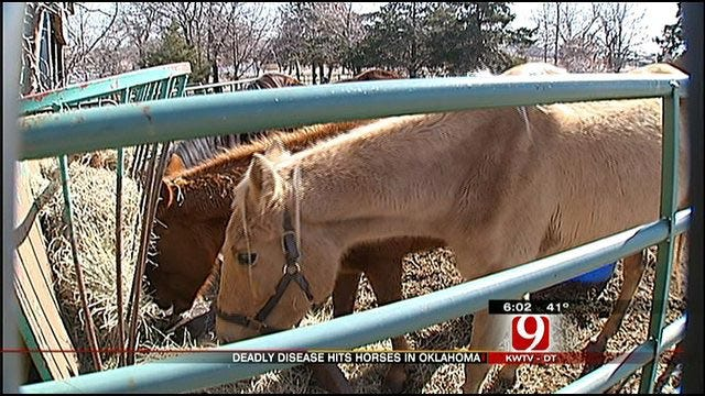 Potentially-Deadly Horse Disease On The Increase In Oklahoma