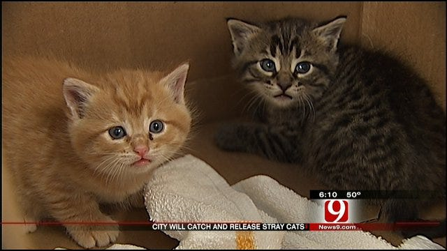 OKC Shelter Starts Program To Catch, Release Stray Cats