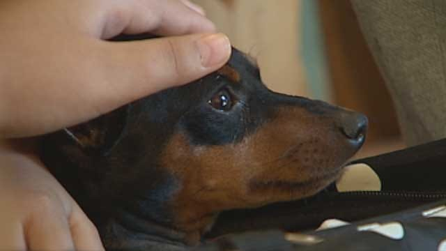 Fund Set Up In Enid To Help Injured Dog Of Autistic Boy