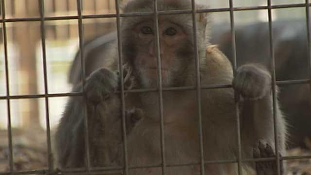 Oklahoma Facility Provides Sanctuary To Research, Pet Monkeys