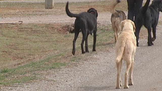 Couple Says Their Neighbor Poisons Animals In Grady County