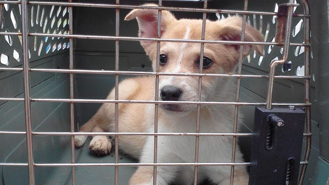 Dozens Of Puppies Saved From McClain County Puppy Mill