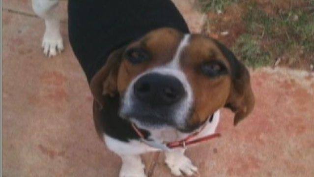 Grady County Family Says Their Dog Was Beheaded