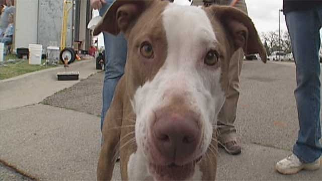 College Students Spend Spring Break At The OKC Animal Shelter