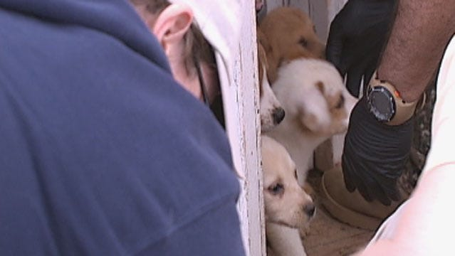 No Charges Filed In McClain County Puppy Mill Case