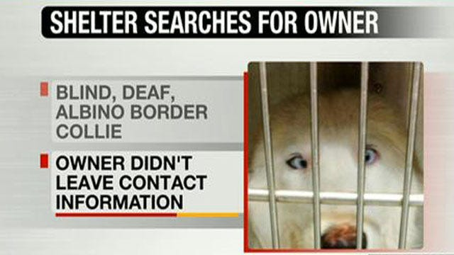 OKC Animal Shelter Tries To Reunite Lost Dog With Owner