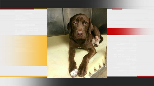 OKC Animal Rescue Group Helps Reunite Injured Dog With Family