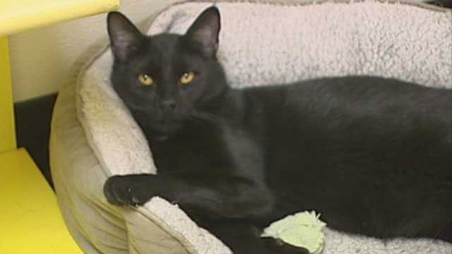 Metro Pet Owners Concerned As Black Cats Go Missing on Halloween