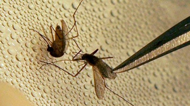 More West Nile Virus Cases Confirmed In Oklahoma