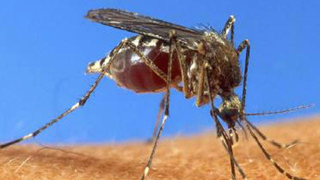 West Nile Virus Cases In Oklahoma Break Record, Two More Deaths