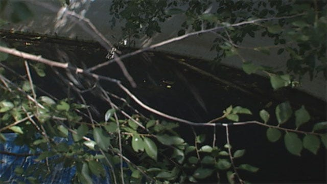 Del City Woman Concerned Over Lack Of Help Amid West Nile Woes