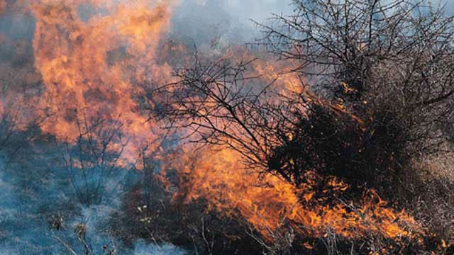 Firefighters Contain Grass Fire In SE OKC