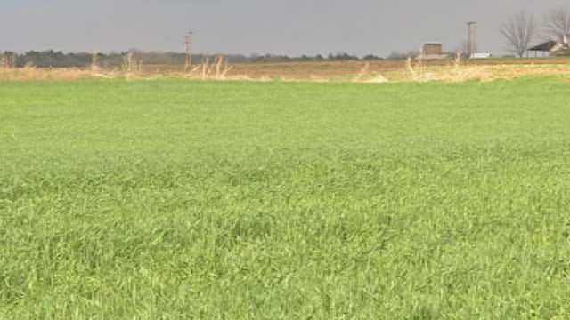 Cold Snap Could Devastate Oklahoma's Top Crop
