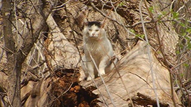 Some Residents Upset Yukon Ordinance That Bans Feeding Feral Animals