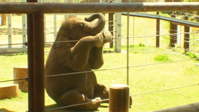Elephant Birthday Bash At OKC Zoo