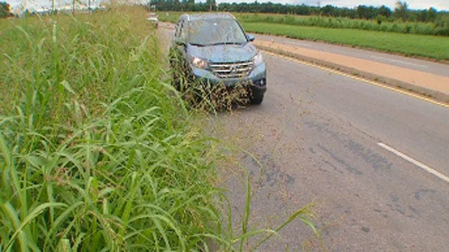 OKC Getting Huge Number Of Tall Grass Complaints